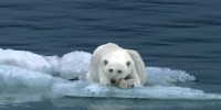 Nissan LEAF: Polar Bear