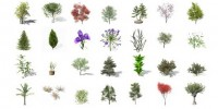130-Free-XfrogPlants-Now-Available!