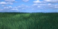 How-to-Create-Realistic-Grass-in-Blender