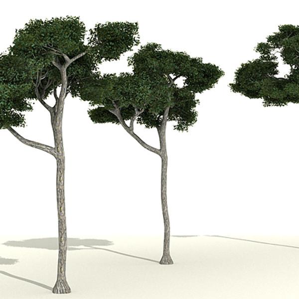3x-high-tree