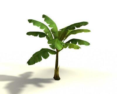 Banana-tree-3d-model