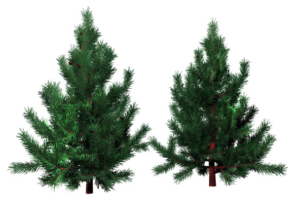 evergreen-pine-tree-holiday