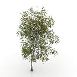 tree_birch