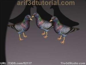 3D-Models-Piegeon