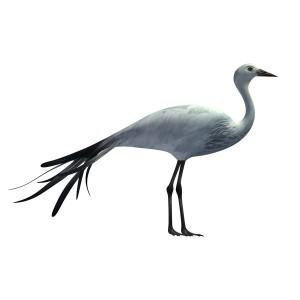 African-Blue-Crane