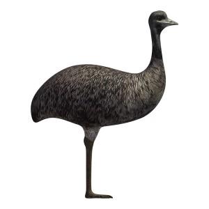 Australian-Emu