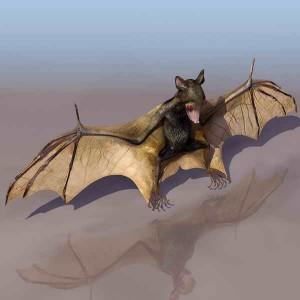 Bats-animals