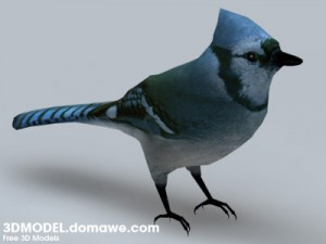 Blue-Jay