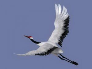 Crane-3D-model