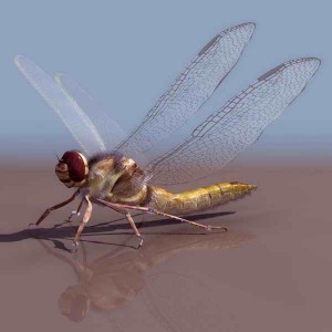 Dragonflies-animals