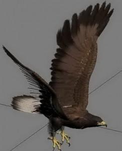 Eagle-3D-Model