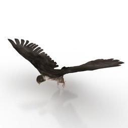 Falcon-and-Bird-3D-Model
