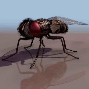 Flies-animals