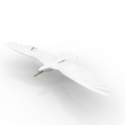 Mew-Gull-and-Bird-3D-Model