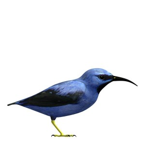 Purple-Honeycreeper