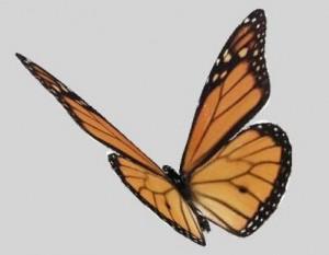 butterfly-3D-Model