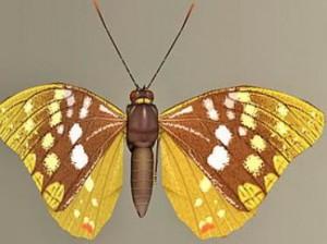 model-beautiful-butterfly