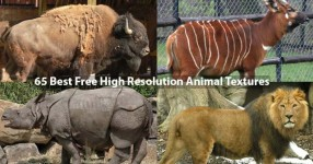 65 Best Free High Resolution Animal Textures
