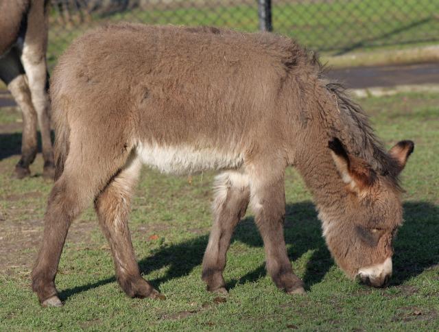 free donkey texture
