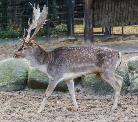 free texture deer