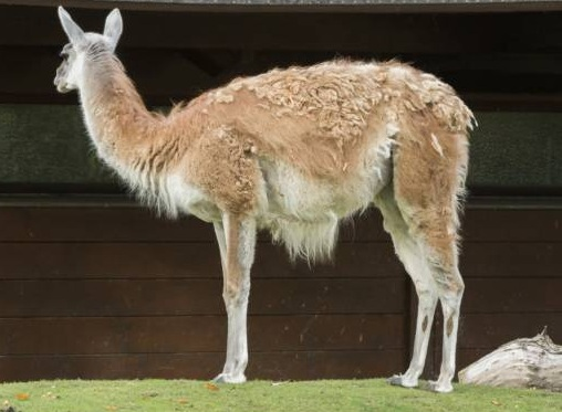 free texture llama
