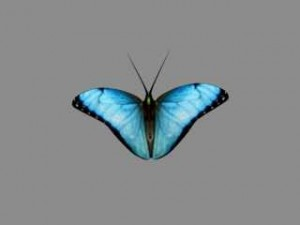 butterfly-3d-animated-model-free