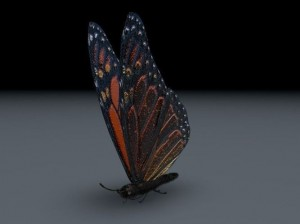butterfly-3d-model-free-animated