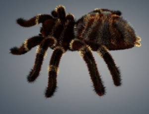 spider-tarantula-3d-model-animated