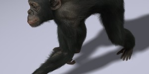 Chimps-ANIMATED-FUR-3d-model