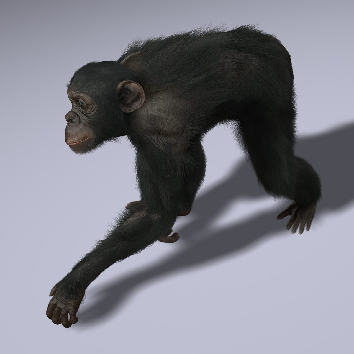 Chimps-ANIMATED-FUR-3d-model