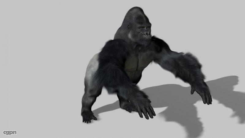 Gorilla-3d-model