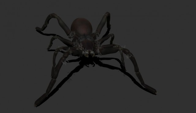 carolina_wolf_spider_low_high_poly_models_3d